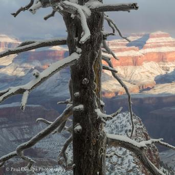 Grand Snow-Canyon #20