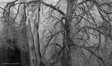 Joshua Tree bw #2