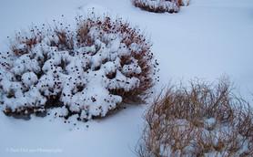 Snow #9