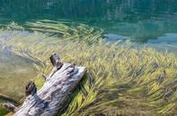 Ediza Lake #8