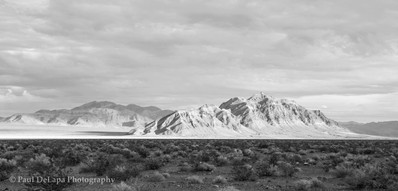 Mohave bw #4