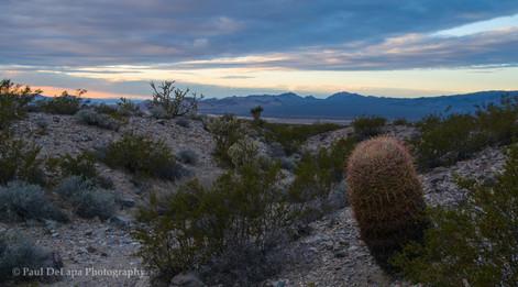 Mohave Desert #6