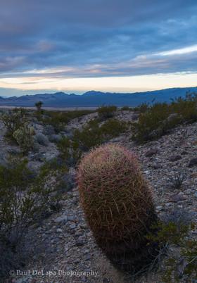 Mohave Desert #5