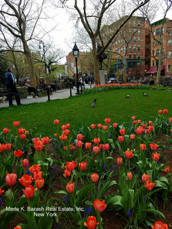 Abington Square Park watermarked