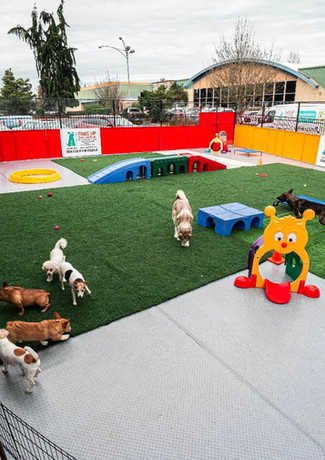 Paws VIP - Dog Daycare