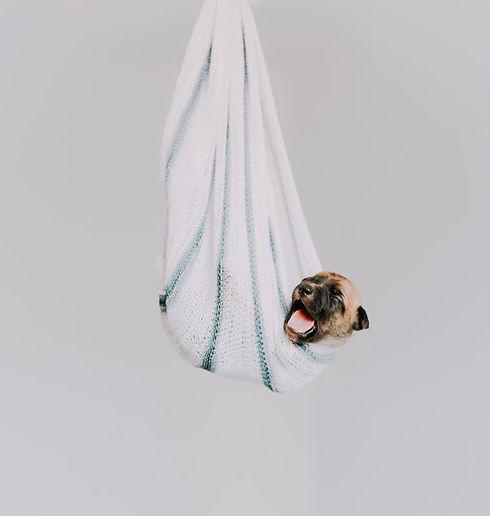 dog-grooming---dog-sitter---dog-walker-n
