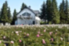 peonies-farm---Homer-Alaska---online-flo