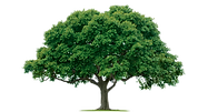 free-tree-png-10201.png