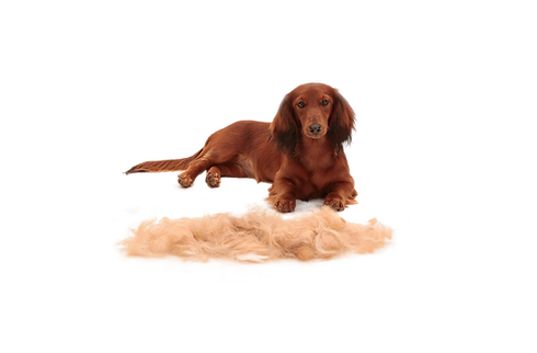 furminator_deshedding_small_dogs_long_ha