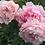 Thumbnail: Sarah Bernhardt