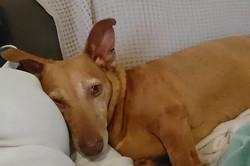 Molly (Estrella)