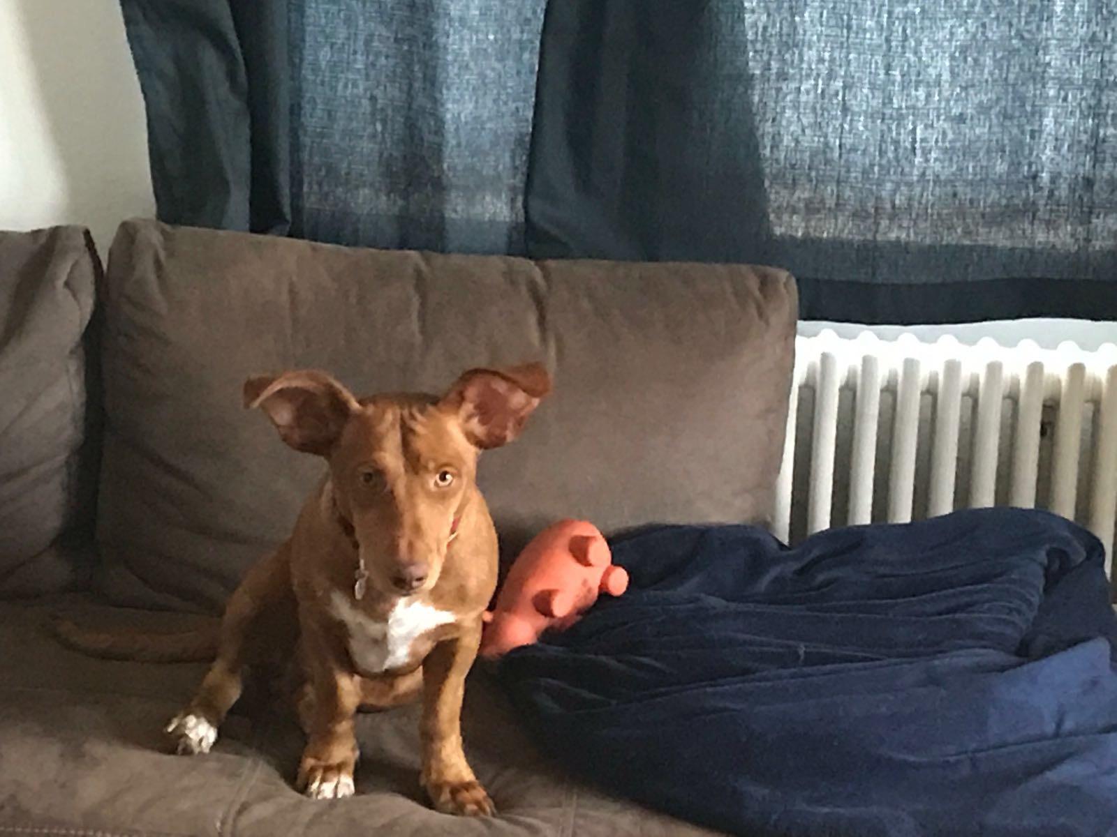LEO (Ginger)