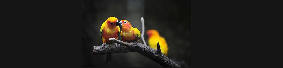 версия-трех-птиц-1.jpg
