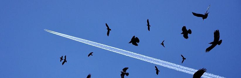 birds_flying_sky_flock_71918_2560x1080_e