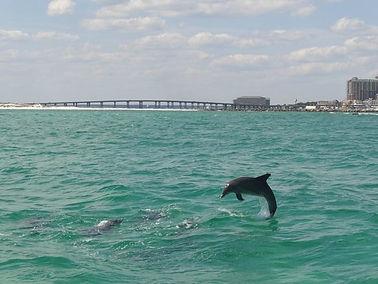 dolphins detin boat rental.jpg