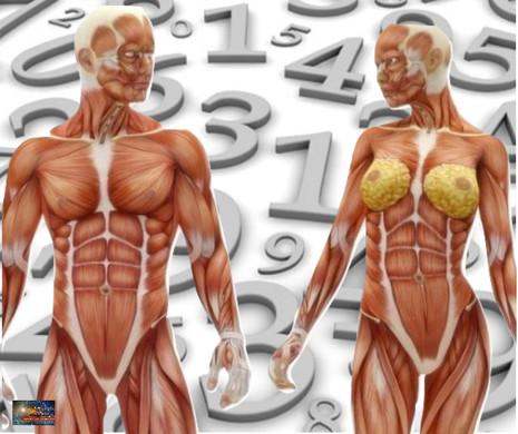 Os Números do Corpo Humano