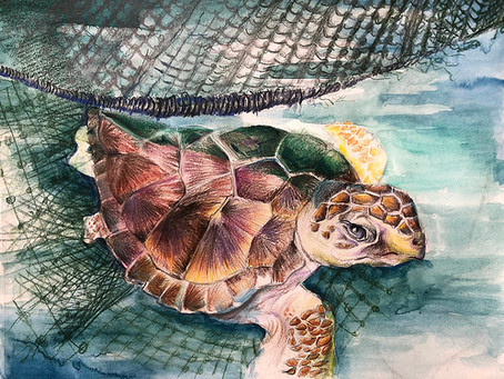K-12 16th Annual Saving Endangered Species Youth Art Contest