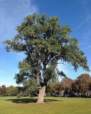 big_green_tree-928671.jpg!d.jpeg