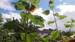 Ein Sommerblumen-Leben lang
