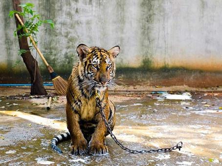 Lutter contre l'exploitation animale en voyage