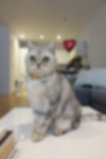 Cat Actor Model Working Animal