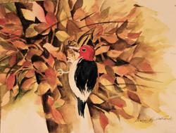 Autumn Woodpecker
