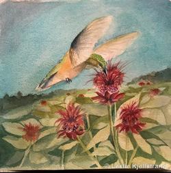 LRK-hummingbird.png