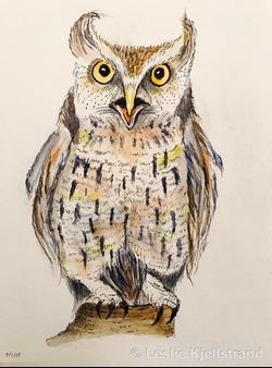LRK-owl-2.png