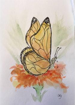 butterfly breakfast.jpg