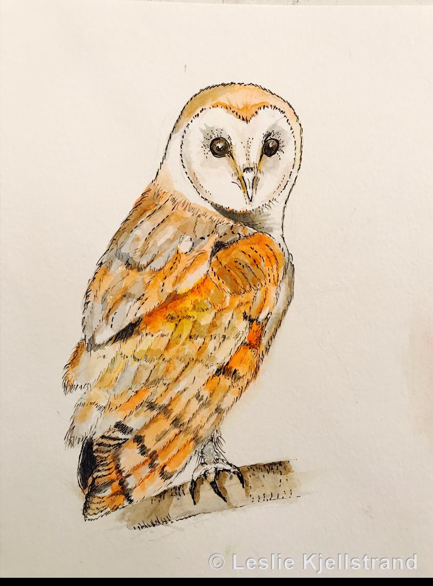 LRK-owl-3.png