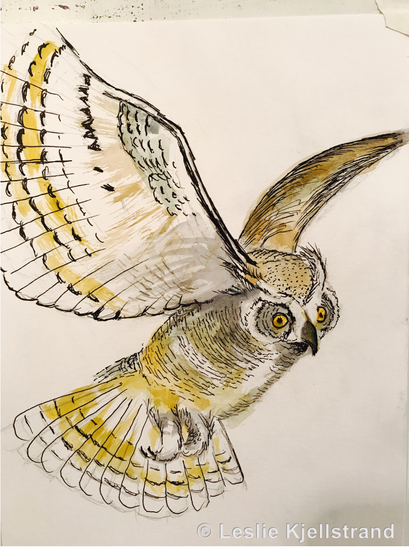 LRK-owl-4.png