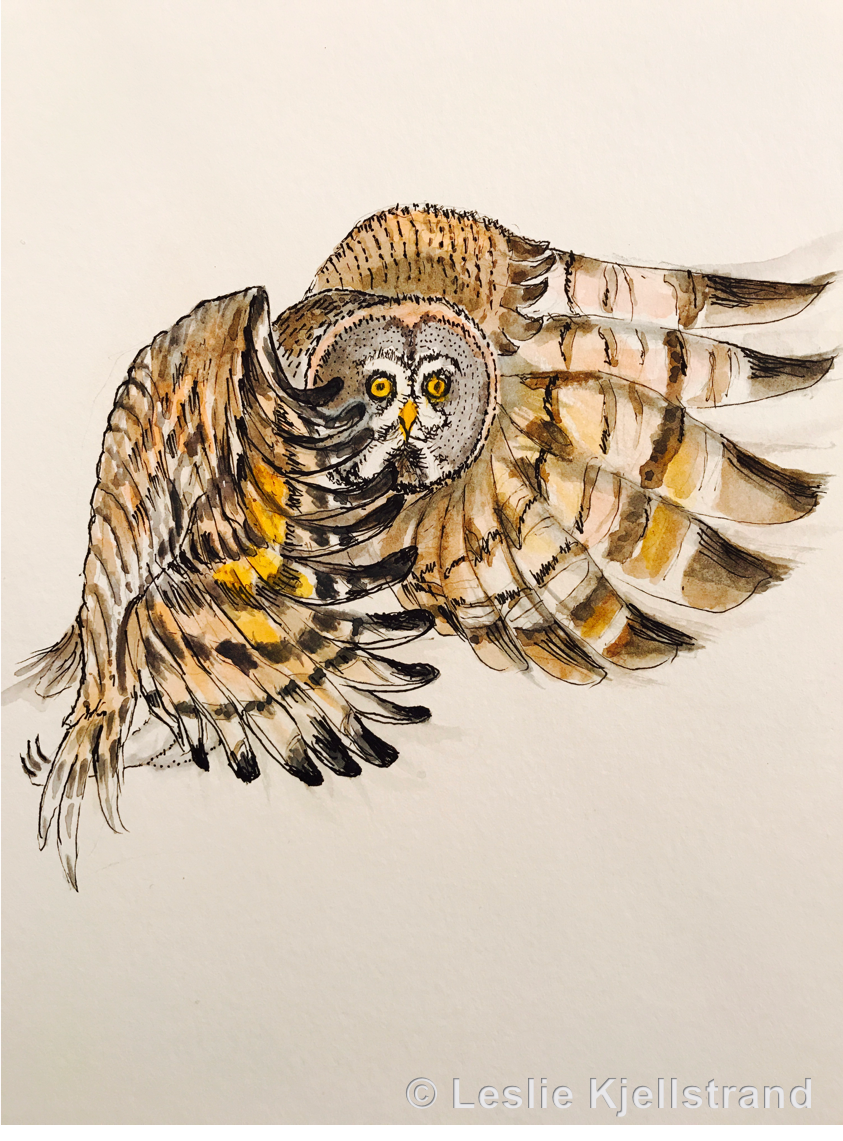 LRK-owl-5.png