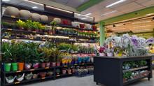 Floricultura nos Supermercados Dalben: Decoração que gera faturamento