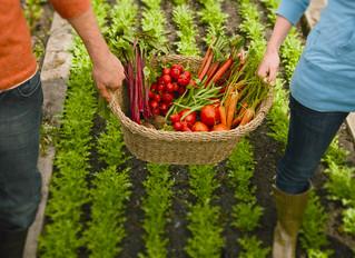Aplicações do Ozônio na Indústria de Alimentos e Agricultura