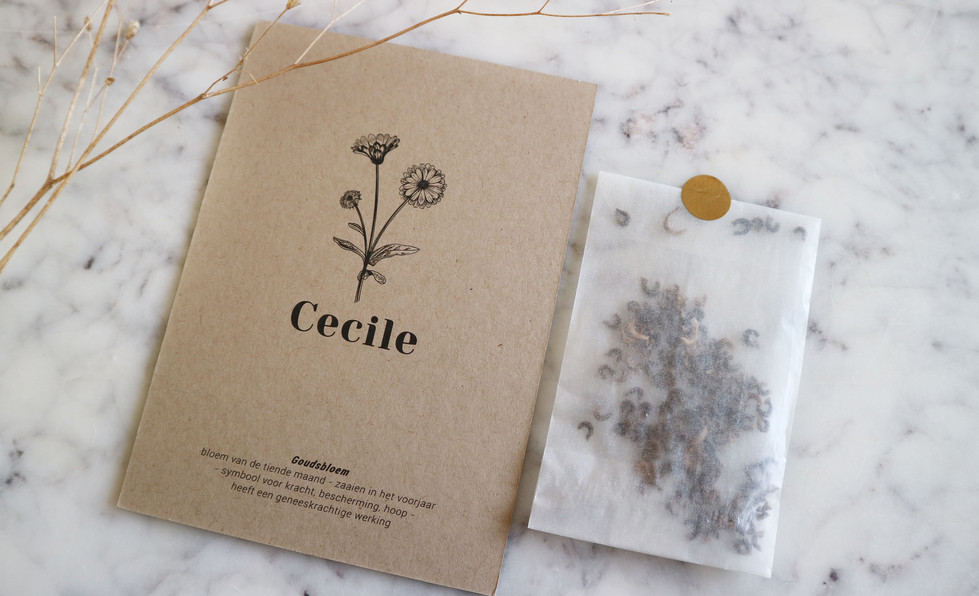 Cecile02.jpg
