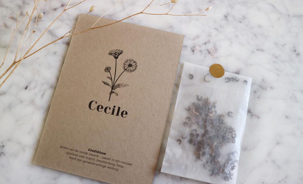 Cecile01.jpg