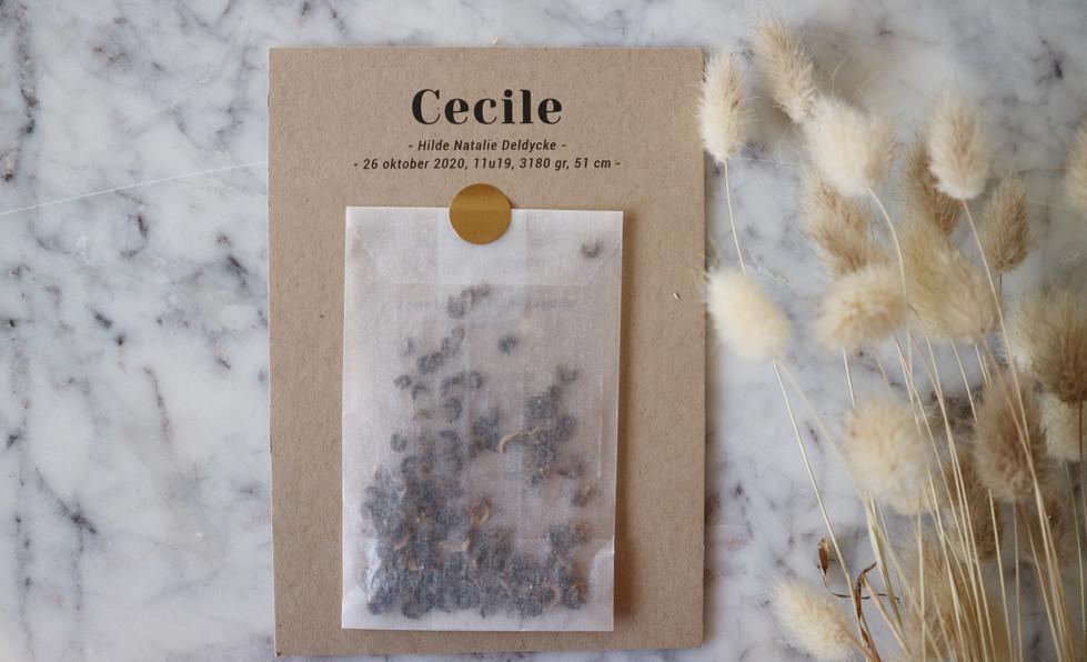 Cecile4.jpg