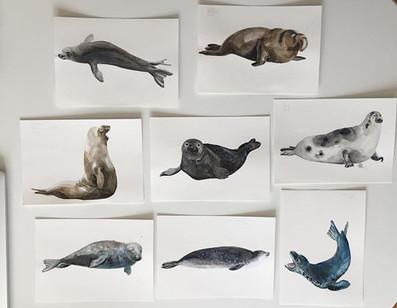 Sooo many seals!!! I still have to work