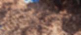 08 Desert Secrets Ximenia americana kern