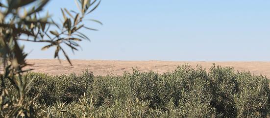 05 Desert Secrets Olive Pic 1.png