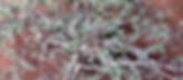 01 Desert Secrets Myrrh Pic 2.png