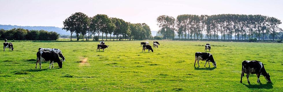 Cattle%2520in%2520Pasture_edited_edited.