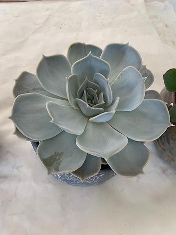 plant pot 4.jpeg