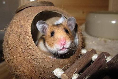 Casa de coco para hamster