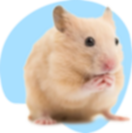 hamster_ruso.png