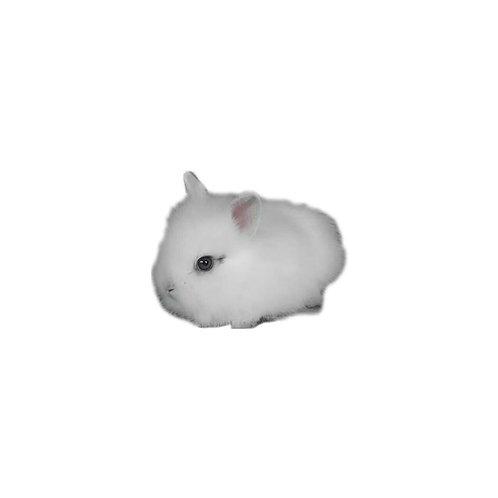 Fuzzi Teddy - Conejo Otros