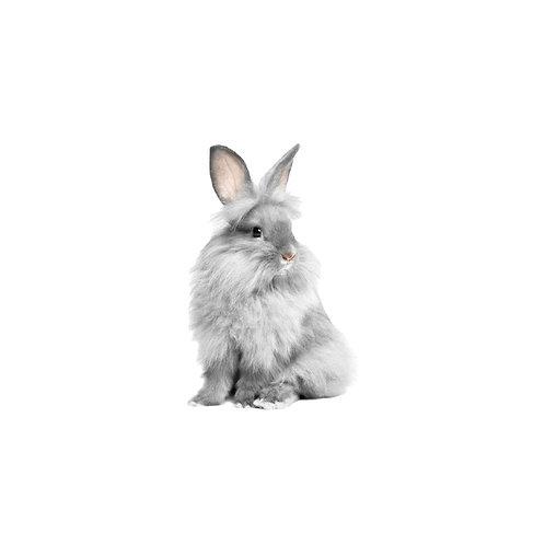 Teddy Puro - Conejo Otros