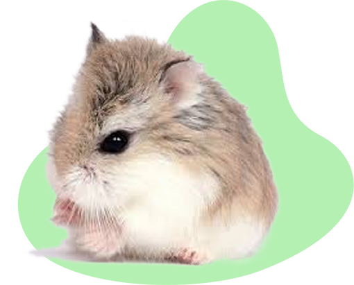 hamster_chino.png