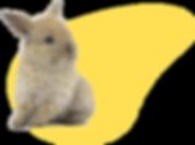 Conejo MiniLeon