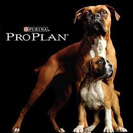 alimento-pro-plan-para-perros.jpg